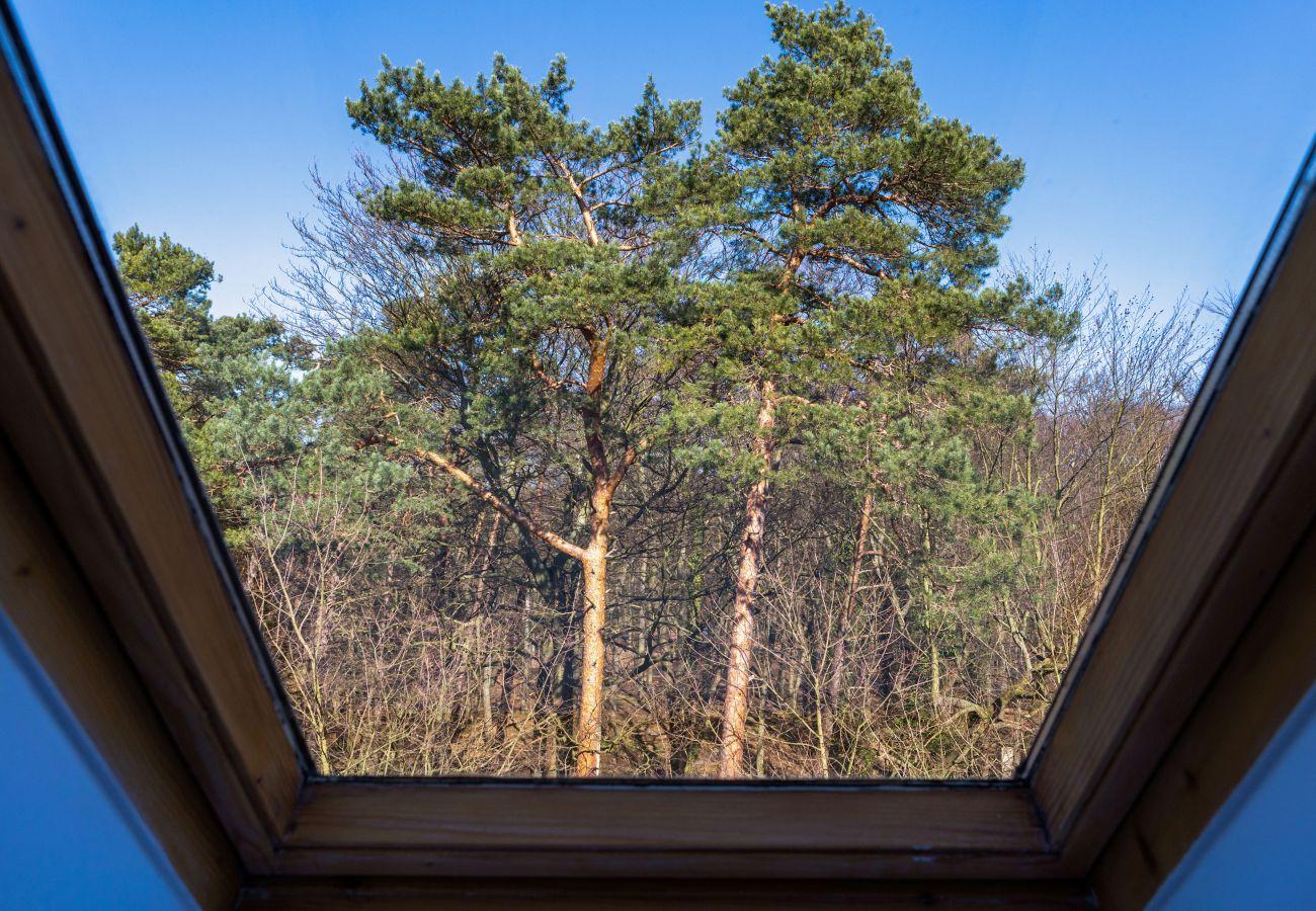 apartament, wynajem, salon, widok, las Międzyzdroje